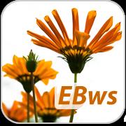 English Basic Web Suite